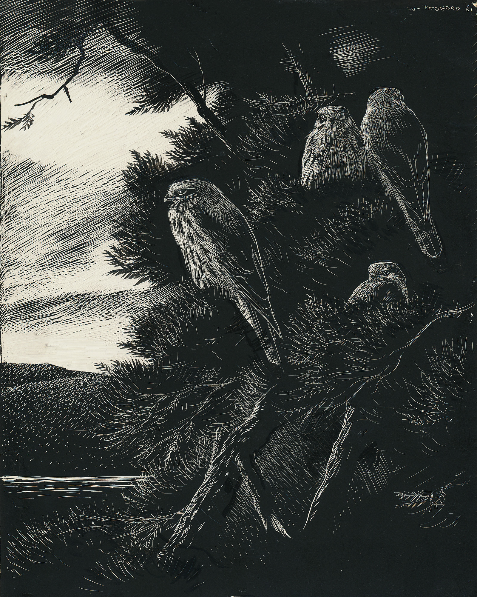 Signed Original Drawing: The Birds of the Lonely Lake - ,